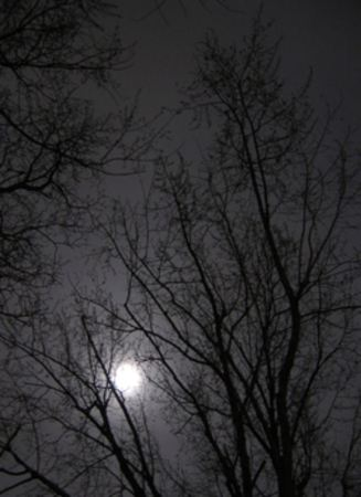 moon through leafless trees in the yard (by ctd 2005)