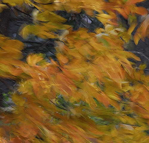 autumn wind (bob jagendorf)