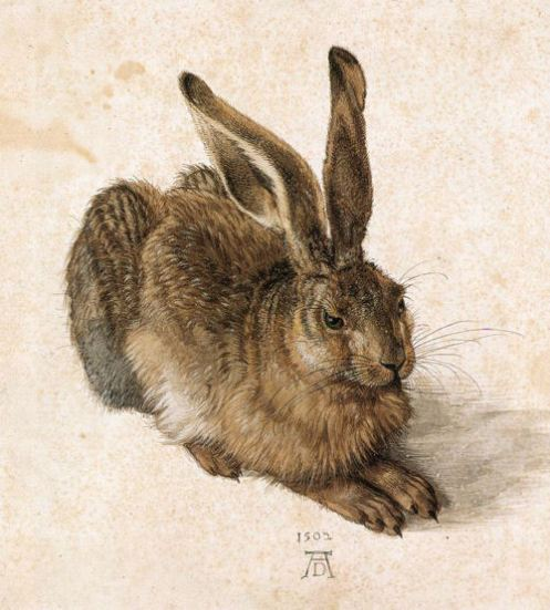 young hare bydurer