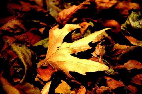 Sun Leaf (vadodara)