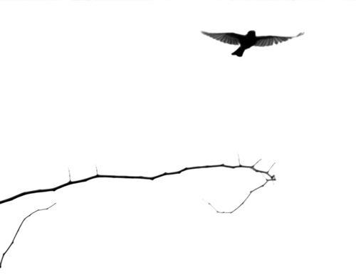 Bird in Flight by Cayusa