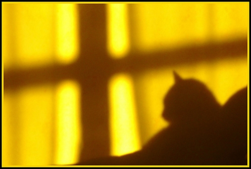cats-shadow-difonatura